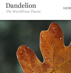 Dandelion Themeforest - шаблон для портфолио на Wordpress